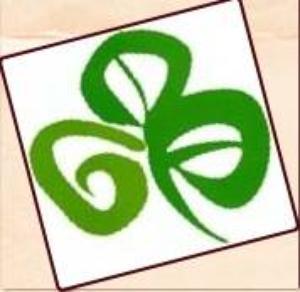 THE SHAMROCK IRISH PUB & BEER SHOP
